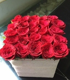 25 red color roses in a white box