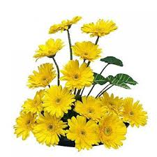 10 yellow gerberas in a basket
