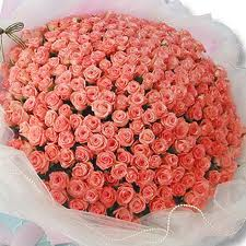 150 Roses of pink arranged in basket