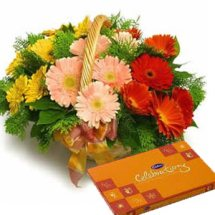20 Gerberas basket celebration