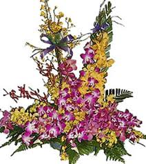 50 Orchids large arrangement