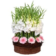 50 gerberas and gladioli in a basket
