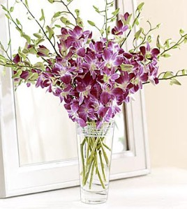 Orchids in a galss vase