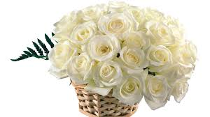 30 white roses basket