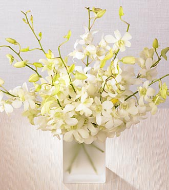 White orchids in a vase